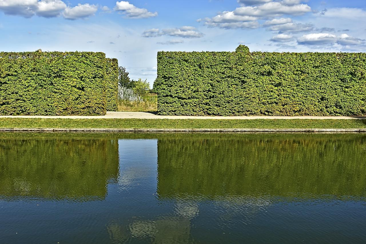 živý plot u vody